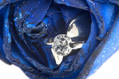 Blue roses and wedding rings — Stock Photo