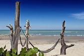 Hamak ıssız bir sahilde — Stok fotoğraf