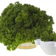Curly parsley — Stock Photo #28141887