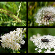 Stock Photo: Macro photo collages