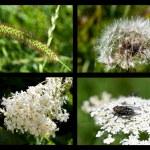 Macro photo collages — Stock Photo