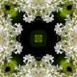 Flowers kaleidoscope background — Stock Photo