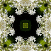 Flowers kaleidoscope background — Stockfoto