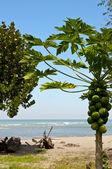 Deserted beach in a bay in Ecuador — Stock Photo