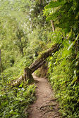 Ecological path in Ecuador — Stock Photo