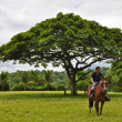 A man on horseback — Stock Photo