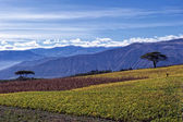 Agriculture in the Andean highlands — Stock Photo