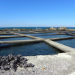 Foto de Stock  : Cultivation of mussels 3