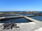 3 貝の栽培 — ストック写真