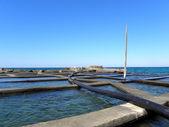 ムール貝 1 の耕作 — ストック写真