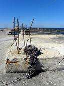 貝 2 の栽培 — ストック写真