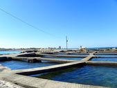 ムール貝の耕作 — ストック写真