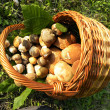 Stock Photo: Basket mushrooms