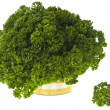 Curly parsley — Stock Photo #29430937