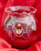 Orchid in glass vase — Stock Photo
