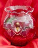 ガラス花瓶に蘭 — ストック写真