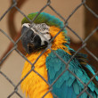 Macaw — Stock Photo #34281813