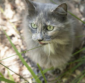 Fluffy Cat — Stockfoto