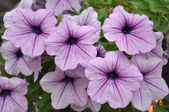Violet flower on many color background — Stok fotoğraf