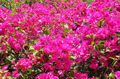 Violet flower on many color background — Stock Photo