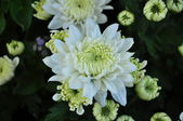 White flower on many color background — Foto Stock