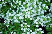 White flower on many color background — Стоковое фото