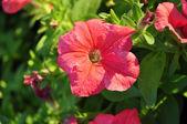 Violet flower on many color background — Foto Stock