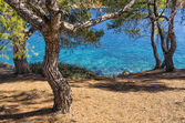 View to the sea through the trees in Sithonia, Chalkidiki, Greece — Stock Photo