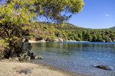 A floresta encontra o mar em sithonia, chalkidiki, Grécia — Fotografia Stock
