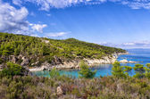 Forest and amazing sea, in Sithonia, Chalkidiki, Greece — Stock Photo