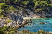 Rocky coast with a little hidden sandy beach, in Sithonia, Chalkidiki, Greece — Stock Photo