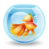 Vektorové ilustrace zlaté rybky v akváriu — Stock vektor