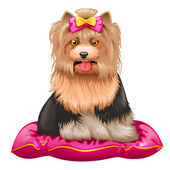 Little Yorkshire Terrier on pillow — Vector de stock