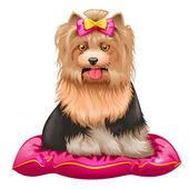 little Yorkshire Terrier on pillow — Stock vektor