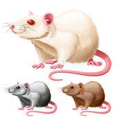 Illustration of lab rat on white background — Stock Vector