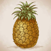 Engraving pineapple in retro style — Stock Vector