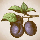 Engraving plum on the branch in retro style — Vector de stock