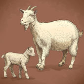 Vector illustration of engraving goat and kid — Cтоковый вектор