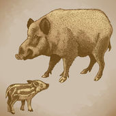 Vector engraving boar and piglet — Stok Vektör