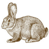 Vector engraving rabbit on white background — Vetor de Stock