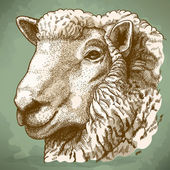 Vector illustration of engraving head of sheep — Stock vektor