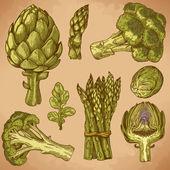 Gravírování ukázka ze zelené zeleniny — Stock vektor
