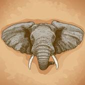 Vector illustration of engraving elephant head — Stock Vector