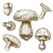 Engraving illustration of mushrooms — Stock Vector