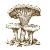 Engraving illustration of three mushrooms — Stockvector