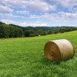 Country landscape with rolls of hay — Stock Photo