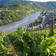 Vineyards of Moselle River — Stock Photo #31333895