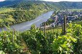 Vineyards of the Moselle River — Stock Photo
