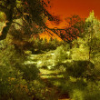 National Park Carmel.  Infrared photo — Stock Photo