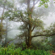Tree in mist. — Stock Photo #35325505